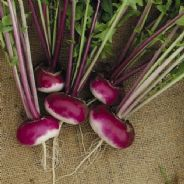 Turnip Purple Top Milan Seeds 500 seeds / 3500 seeds